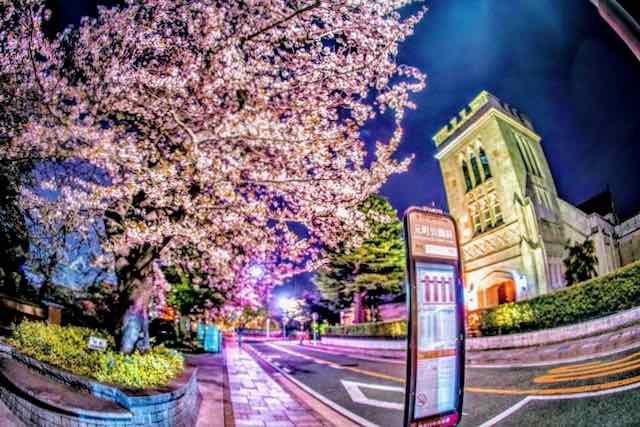 桜と自動電話-5