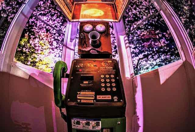 桜と自動電話-4