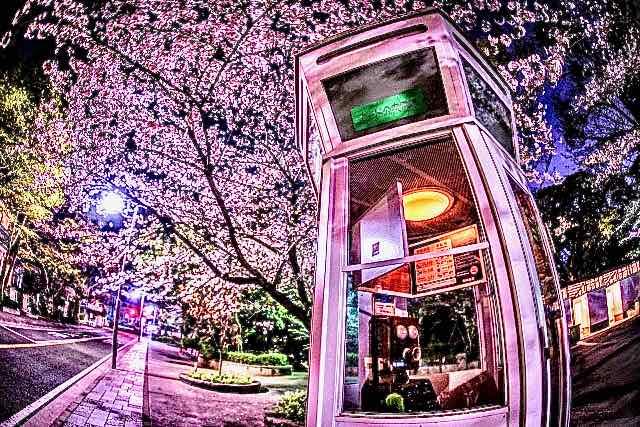 桜と自動電話-3